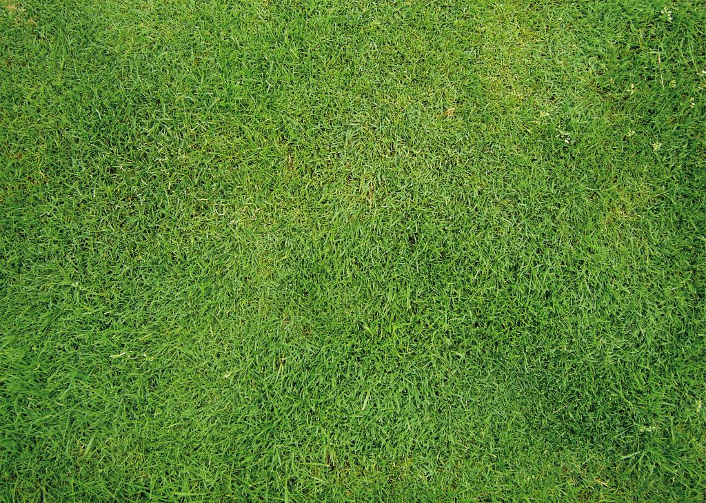 trava-pozadina